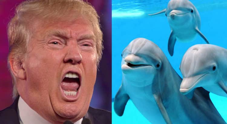 Trump andDolphins