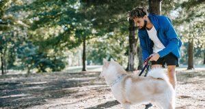 Training Collar for Stubborn Dogs