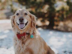 dog waterproof shock collar