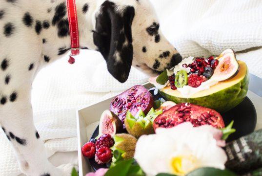 healtiest dog food