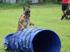 training tunnels for dogs