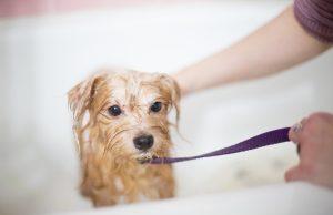 dog bath how often