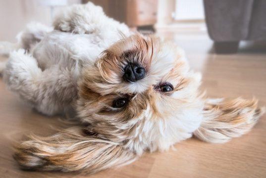 happy dog after Benadryl