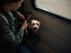 how to fly internationally with a dog